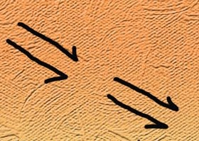 Kangaroo Tracks